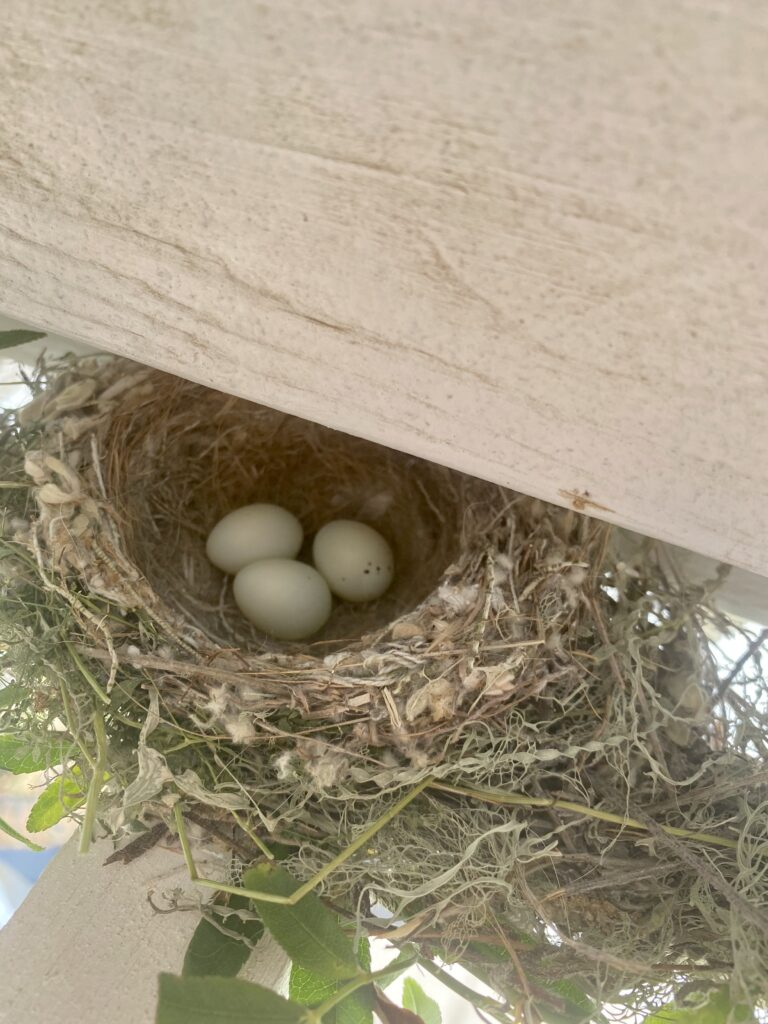 spring she shed bird nest with eggs