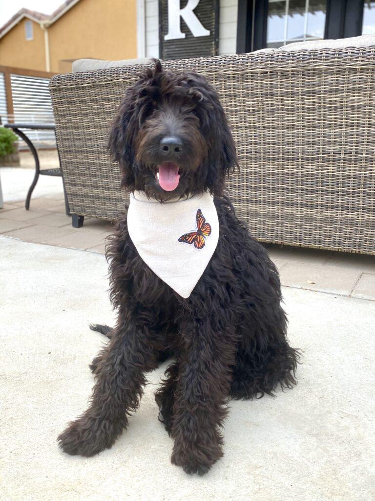 Drop Cloth Dog Bandana