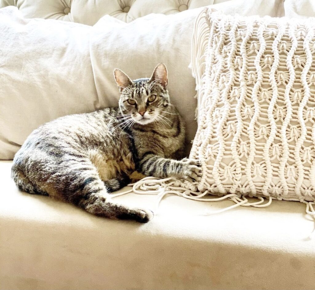 cat on sofa with macrame pillow cover