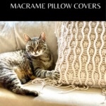 cat with macrame pillow cover